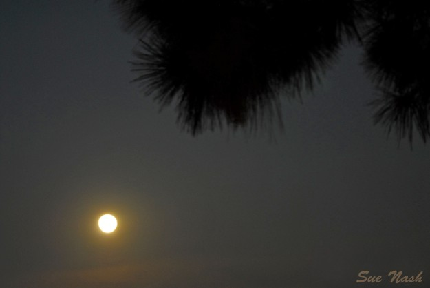 This shot looks more like a sunset than a moonrise!